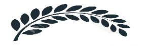Branche laurier